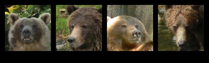 Bear Poses