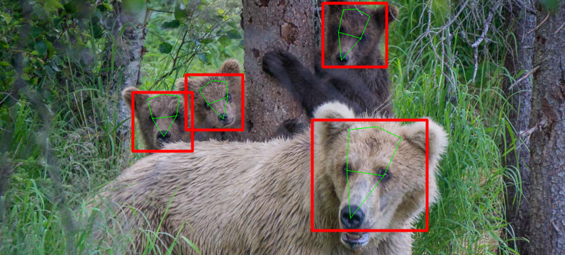 Bear Face Landmarks