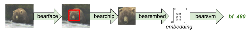 bearid data flow