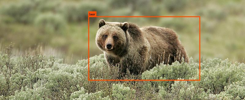 YOLO Bear Detector