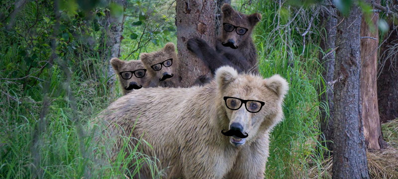 Hipster Bears