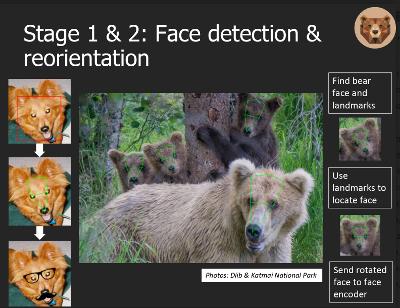 BearID Presentation