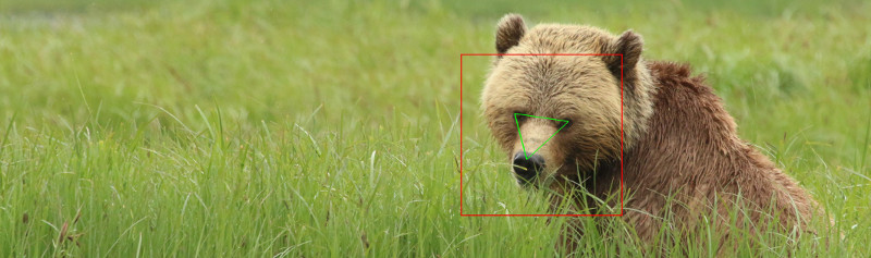 The BearID Project using deep learning and facial recognition to monitor brown bear populations.